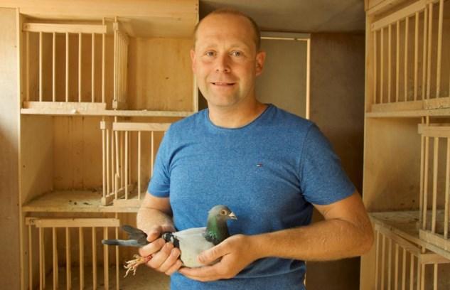 Deel 8 - Vluchten jonge duiven